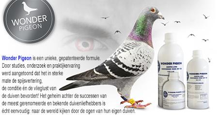 wonder pigeon ad..jpg